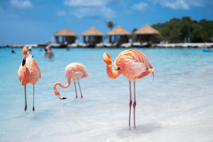 Aruba – Enero a marzo 2021