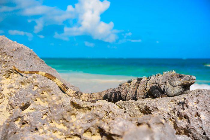 Riviera Maya – Enero 2022