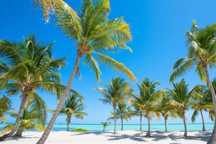 Punta Cana – Julio a agosto 2021